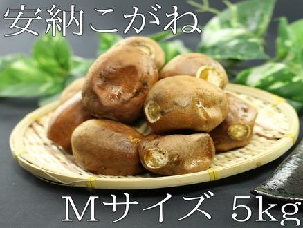 kogane_m_5kg