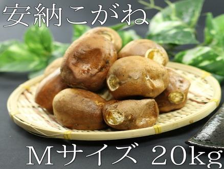 kogane_m_20kg